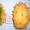 Семена - почтой: овощные экзоты - кивано,  момордика,  тзимбало и др.,   #504675