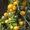 Семена-почтой: коллекция разнообразных томатов,  всего около 300 сортов #504665
