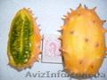 Семена - почтой: овощные экзоты - кивано,  момордика,  тзимбало и др.,