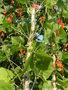 Семена-почтой: коллекция фасоли зерновой,  спаржевой,  грибной,  вигны.