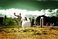 Відео-фотозйомка весіль, корпоративів, ювілеїв FULL HD, 3D - Изображение #4, Объявление #738393